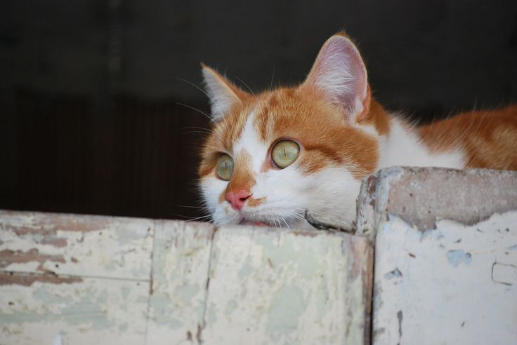 nano, gatto, cat