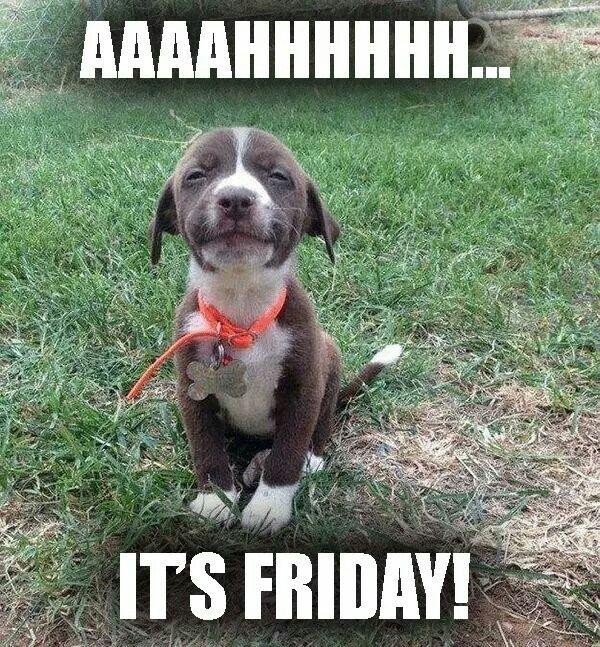 Funny Friday Dog Meme : Best friday messages images on pinterest