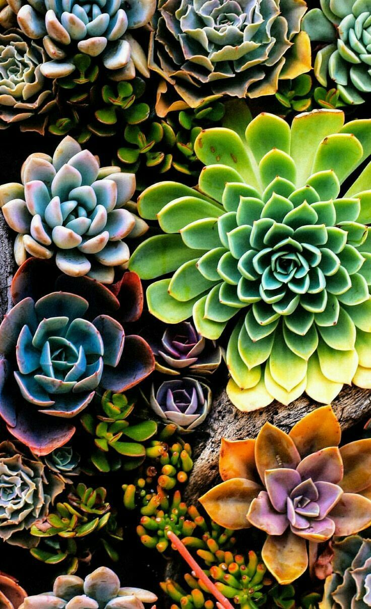 Succulents Succulents Wallpaper Succulents Succulent