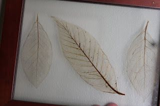 Put leaves in baking soda and water until they become translucent. Put in a picture frame or use for some other decoration... Cool!