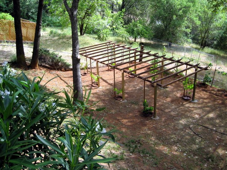 Grape arbor plans bbs radio is going green and planting for Plans for arbors