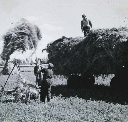 landarbeiders 1962 - hooi binnenhalen