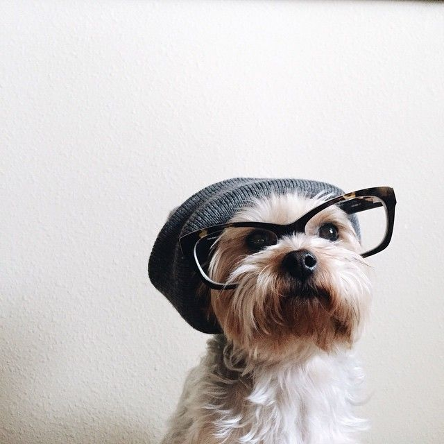 Hipster Dog Published by Maan Ali