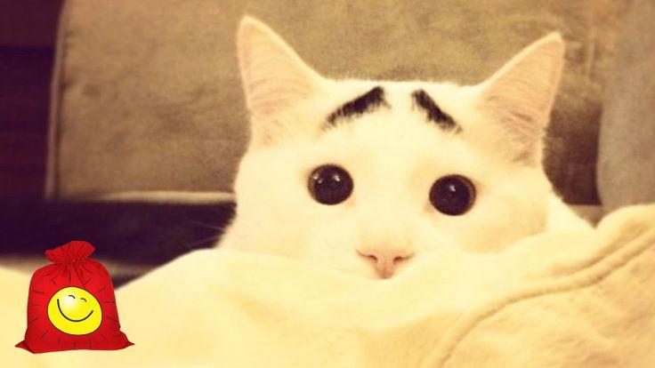 Самые странные коты (часть 2). Смешные неадекватные кошки