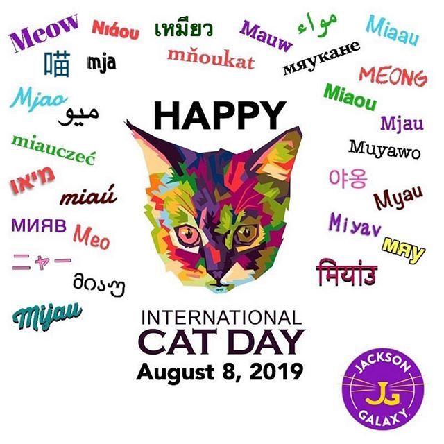 Cat Cats Catstagram Catsofinstagram Catsofinstagram Cats Of Instagram Cat Cats Catsta International Cat Day Cat Day National Cat Day