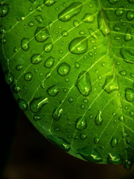 The Green Leaf and Water Photo by Deni Irawan thamrin -- National Geographic Your Shot