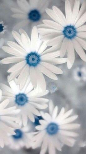 flower background wallpaper by the duke on blue flower. Black Bedroom Furniture Sets. Home Design Ideas