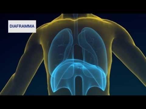 Apparato respiratorio - La respirazione - Sistema respiratorio - YouTube