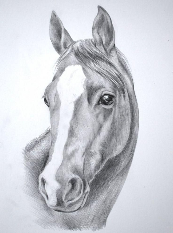 disegni-a-matita-semplici-proposta-muso-cavallo-striscia-bianca-orecchie-tese-sfondo-ombreggiato
