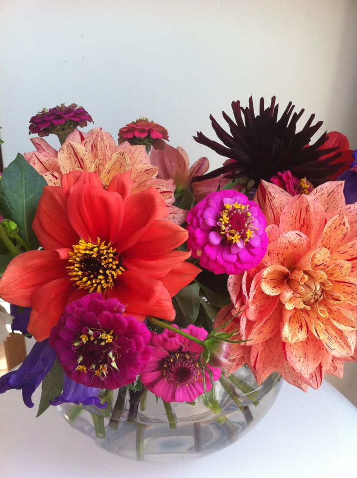Love the splashing late summer colors of these dahlia's and zinnia's