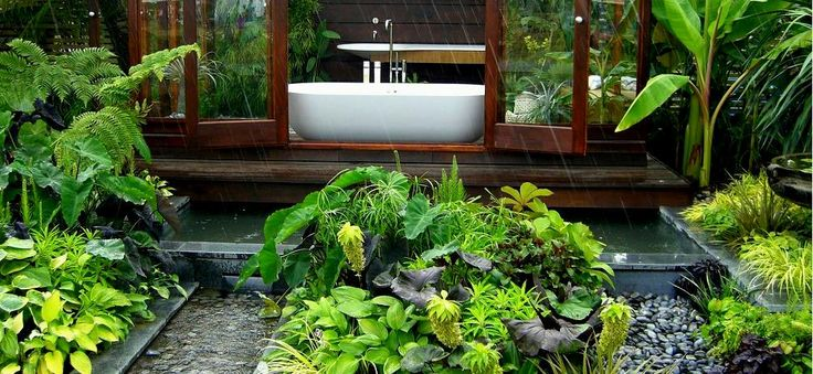 1000 images about sub tropical gardens on pinterest