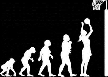Evolution of the netballer