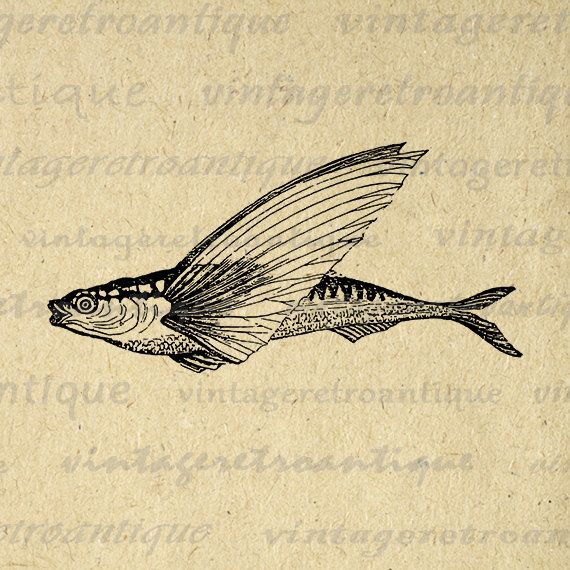 Digital Flying Fish Graphic Image Antique Fish Illustration Printable Download Vintage Clip Art Jpg Png Eps 18x18 HQ 300dpi No.3870 @ vintageretroantique.etsy.com