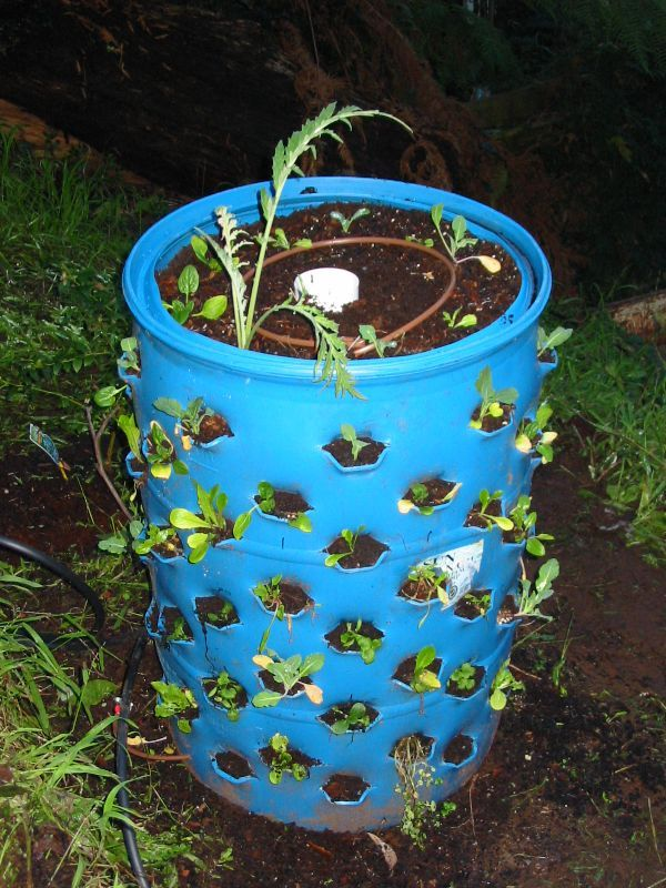 Growing Up To 72 Plants In A 55 Gallon Drum - http://www.ecosnippets.com/gardening/growing-up-to-72-plants-in-a-55-gallon-dru/ -         Gardening space at a premium? Well here's an interesting idea. Go poke a bunch of holes in a 55 Gallon drum and you've just gone and got your own vertical garden that can grow up to 72 individual plants! A great and cheap solution to really increase the growing capacity of y...
