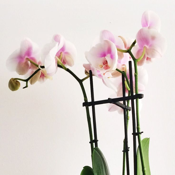 #orchid #love