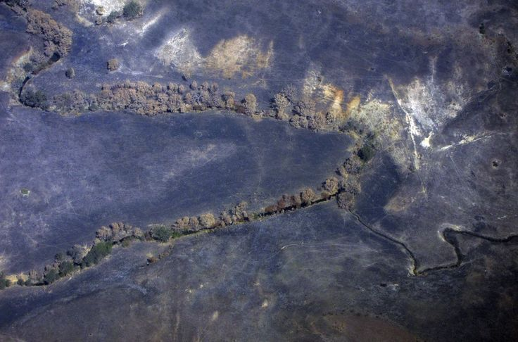 Burnt trees line a small creek in a field charred by a fire on the outskirts of Melbourne in a photo taken in March.