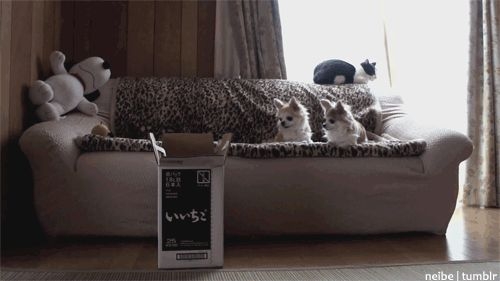 A classic: still one of the best cat GIFs ever. | 12 Funny Cat GIFs (Plus A BonusVideo)