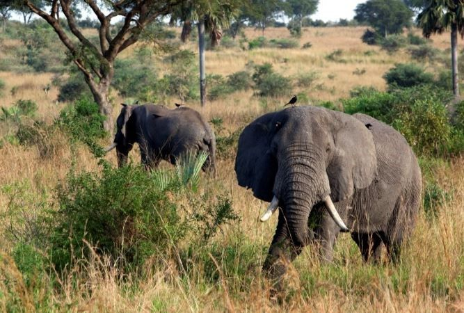 Big Game Hunter Gets Trampled By Elephant He Was Hunting