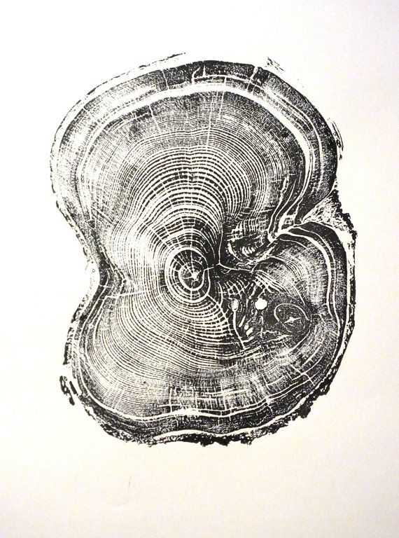 Original Tree Ring Print of Pine from Little by LintonArt on Etsy, $25.00