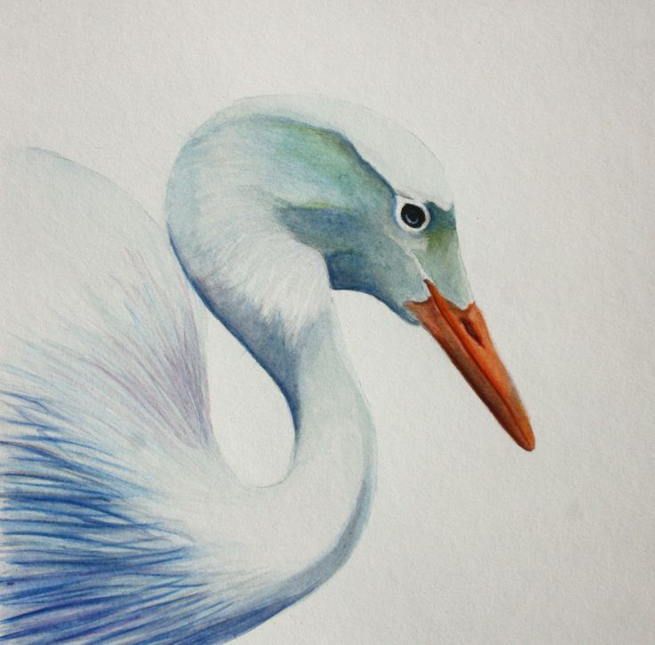 Water colour Bird painting. Blue Crane