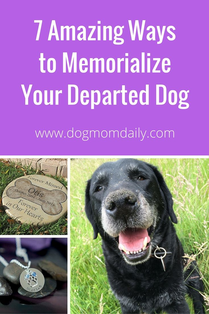 Ideas To Memorialize Your Amazing Dog Dog Memorial