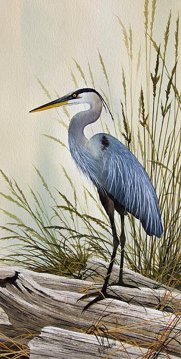Great Blue Heron Shore Painting by James Williamson - Great Blue Heron Shore Fine Art Prints and Posters for Sale