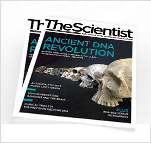 http://www.the-scientist.com/?articles.view/articleNo/43250 Genetic Time Machine... Fascinating Video: Piecing together scraps of DNA from a 400,000-year-old hominin femur