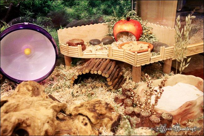 wooden hamster house - Google Search