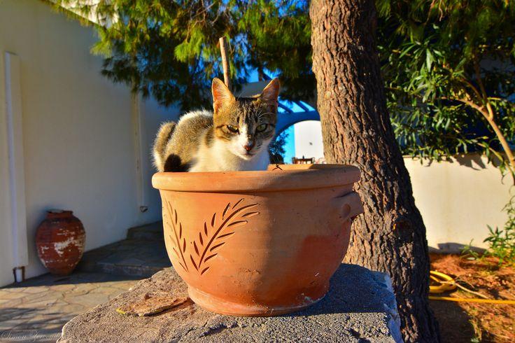 https://flic.kr/p/gp7QCs | Naxos, Greece.