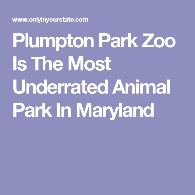 Plumpton Park Zoo Is The Most Underrated Animal Park In Maryland