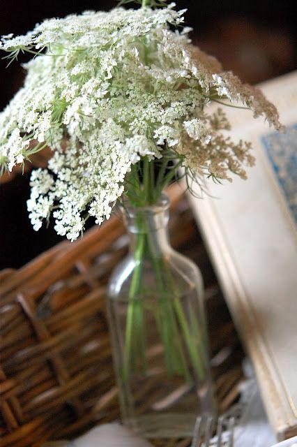 I love Queen Anne's Lace