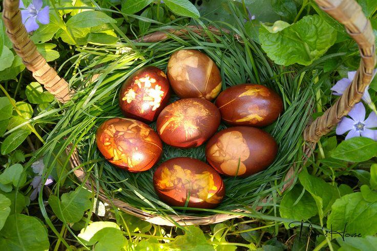 Invata sa realizezi oua vopsite natural