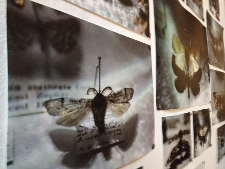 Katie Meadow Photography: May 2014 Photography exhibition at Antwerp Mansion, butterfly and moth collections pinned to wall