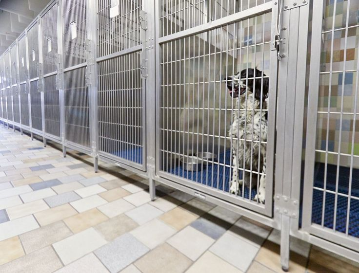 Indoor Dog Kennel Flooring Ideas Indoor Dog Kennel