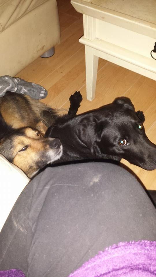 Wat worden we toch verwend tijdens de dagopvang bij Hondenherberg Conwenna!     Toba en Molly samen bij Conwenna in de dagopvang. Wel gezellig bij ons in de woonkamer