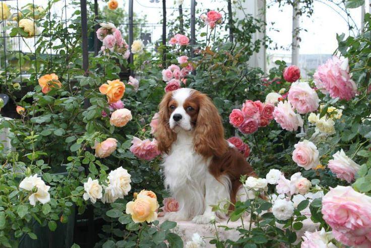 In the rose garden....