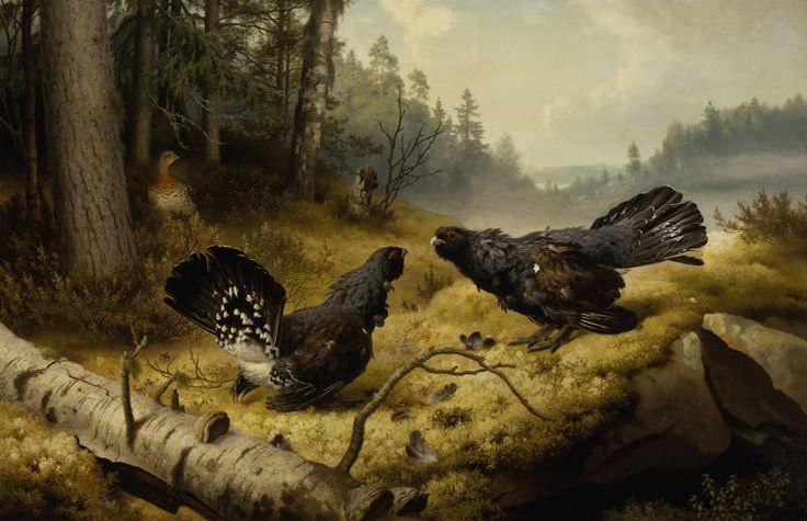 """""""The Fighting Capercaillies"""" - """"Taistelevat metsot"""", 1886 -oil on canvas-  Ferdinand von Wright (1822-1906) - Ateneum- Halvaantuminen v.1884 sitoi Ferdinand von Wrightin vuoteeseen,hän jatkoi vielä pitk.maalaam.kyljellään sängyssä maaten. V.1886 hän lähetti yllätt.pääkaupunk.näytteille poikkeuksell.suuren maalauksen """"Taistelevat metsot"""".Maalaus liitti taiteilijaerakon takaisin ajan taiteen keskiöön,se ostett.heti Suomen Taideyhdist.kokoelmiin.Metsojen suosio on pysynyt…"""
