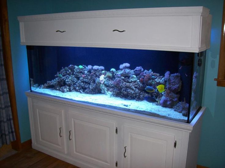 40 best images about fish on pinterest aquarium for Fish tank paint