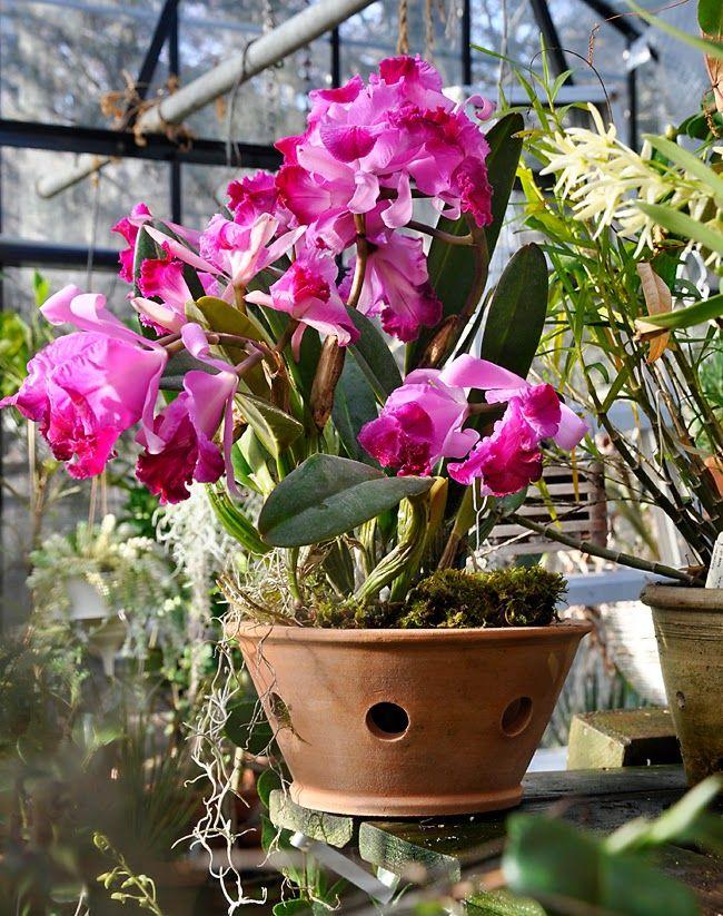 25 Best Ideas About Orchid Pot On Pinterest Orchids