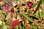 Australian native gardens have never been more popular - they're surprisingly easy to maintain, they're fauna friendly and generally less water hungry than most gardens.