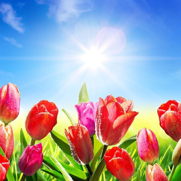 """It's the first day of spring! (sun coming out from behind cloud emoji flower emoji bee emoji) Whether it's your busy season or not you can leverage the season to generate sales for your business! To learn how visit PostcardMania.com and search for """"jump start spring sales."""""""