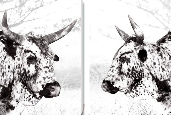 'Duo Inkwazi Set' Canvas Prints. R2950. Delivery is FREE to anywhere in South Africa!