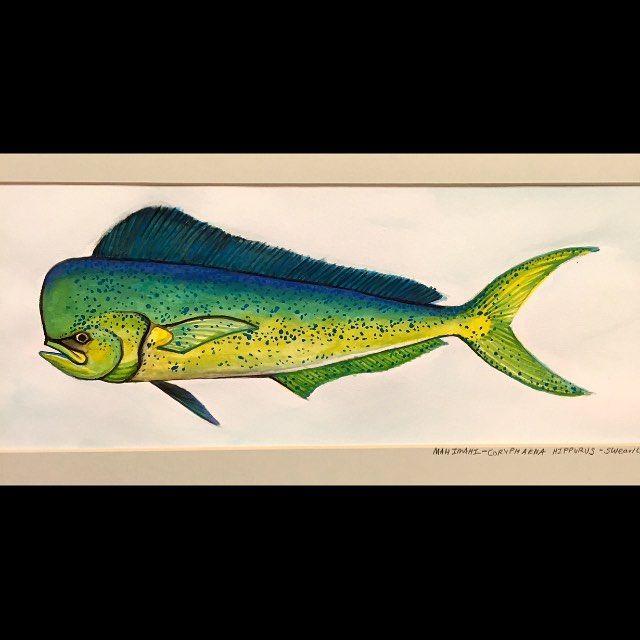 #mulpix More fish. #TBT 2010. #mahi #mahimahi #mahimahimahi #watercolor #paint #painting #fish #dorado #dolphinfish #instaart
