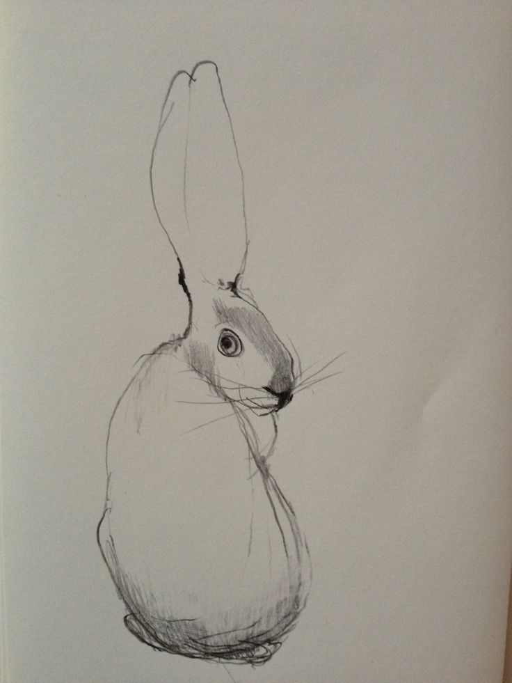 Åsa Millholm #rabbit #drawing #whimsical #illustration - pinned by www.website-designers.co.nz/