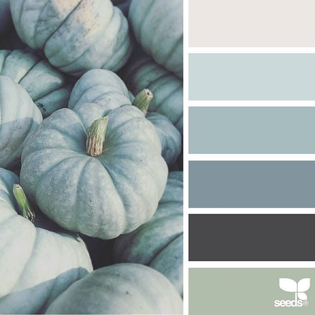 today's inspiration image for { pumpkin tones } is by @suertj ... thank you, Sue, for another incredible #SeedsColor image share!
