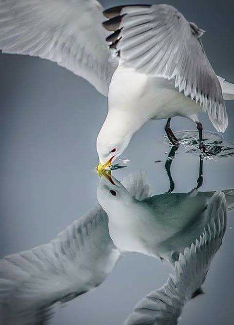 gull & reflection, photographer not listed