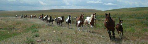 Pitbull Författare Barbro Bruhn: Dessa Hästar ska vara är ägda och uppfödda Av Dans...