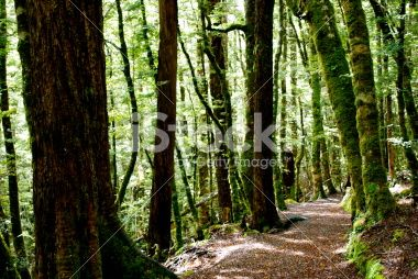 Kahurangi National Park Scene, New Zealand Royalty Free Stock Photo