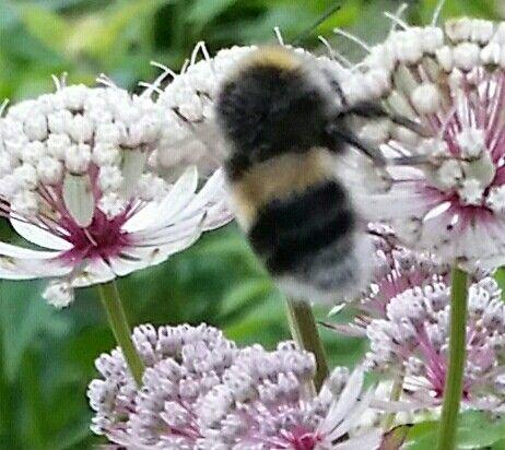 Bumblebee & flowers 👌