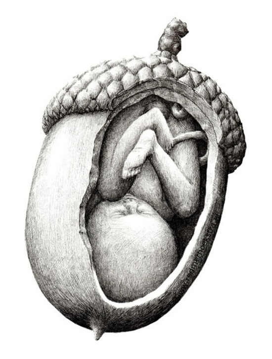 Womb for one. #acorn #art Pinned for BabyBump, the #1 mobile pregnancy tracker with the built-in community for support and sharing.